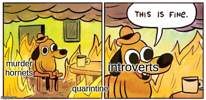 i don't see any problem |  murder hornets; introverts; quarintine | image tagged in memes,this is fine | made w/ Imgflip meme maker