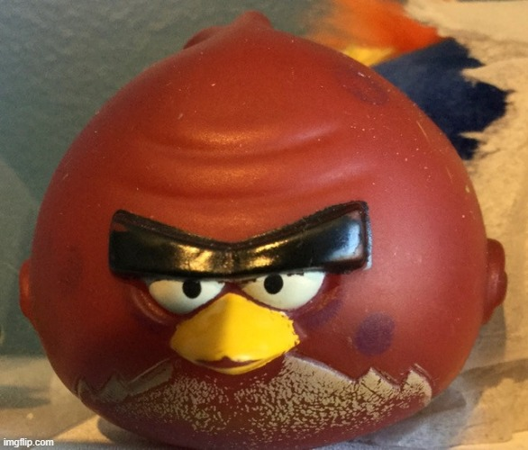 Terry | image tagged in angry birds | made w/ Imgflip meme maker