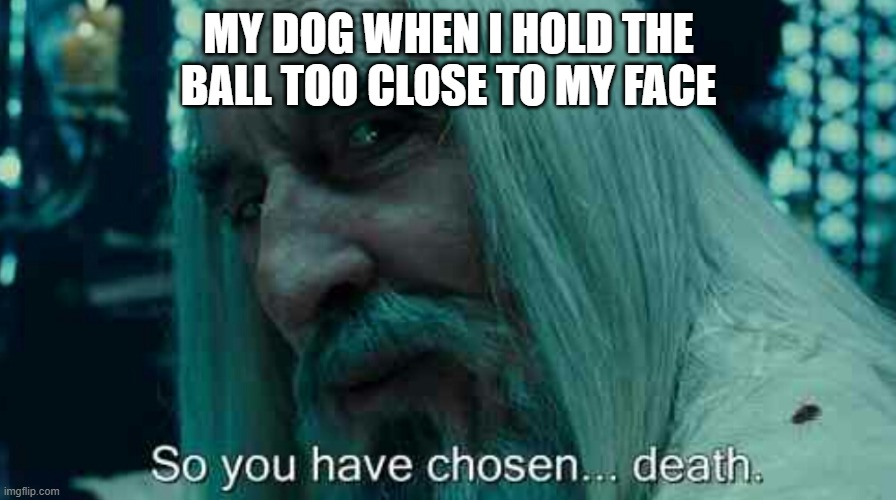 So you have chosen death |  MY DOG WHEN I HOLD THE BALL TOO CLOSE TO MY FACE | image tagged in so you have chosen death,dogs | made w/ Imgflip meme maker