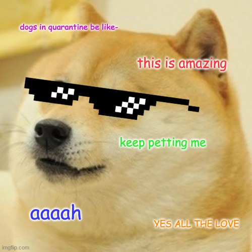 Doge Meme |  dogs in quarantine be like-; this is amazing; keep petting me; aaaah; YES ALL THE LOVE | image tagged in memes,doge | made w/ Imgflip meme maker