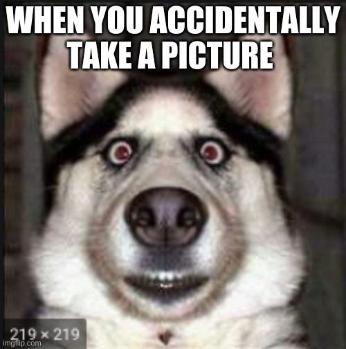 doggie |  WHEN YOU ACCIDENTALLY TAKE A PICTURE | image tagged in iphone | made w/ Imgflip meme maker