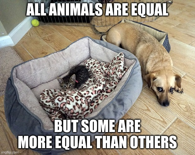 Animal farm meme |  ALL ANIMALS ARE EQUAL; BUT SOME ARE MORE EQUAL THAN OTHERS | image tagged in animals | made w/ Imgflip meme maker