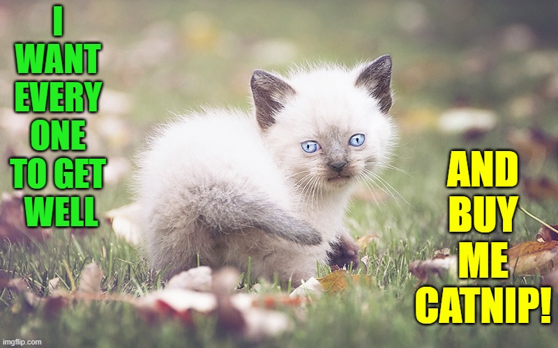 Kind Wishes Kitten |  I WANT EVERY ONE TO GET   WELL; AND BUY ME CATNIP! | image tagged in vince vance,cats,catnip,get well soon,funny cat memes,coronavirus | made w/ Imgflip meme maker