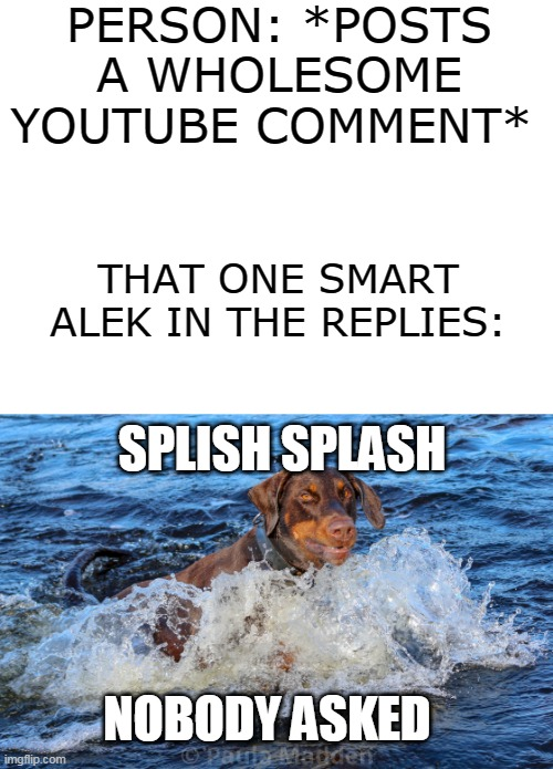 PERSON: *POSTS A WHOLESOME YOUTUBE COMMENT*; THAT ONE SMART ALEK IN THE REPLIES:; SPLISH SPLASH; NOBODY ASKED | image tagged in blank white template | made w/ Imgflip meme maker