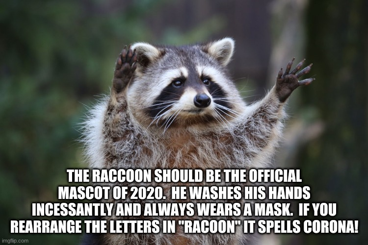 "THE RACCOON SHOULD BE THE OFFICIAL MASCOT OF 2020.  HE WASHES HIS HANDS INCESSANTLY AND ALWAYS WEARS A MASK.  IF YOU REARRANGE THE LETTERS IN ""RACOON"" IT SPELLS CORONA! 