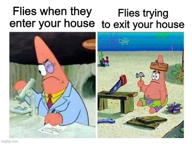 Flies |  Flies when they enter your house; Flies trying to exit your house | image tagged in patrick scientist vs nail,flies,funny memes,relatable | made w/ Imgflip meme maker