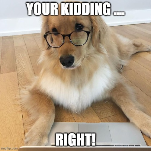 when your human says there's no more treats left |  YOUR KIDDING .... RIGHT! | image tagged in dissapointed puppy | made w/ Imgflip meme maker