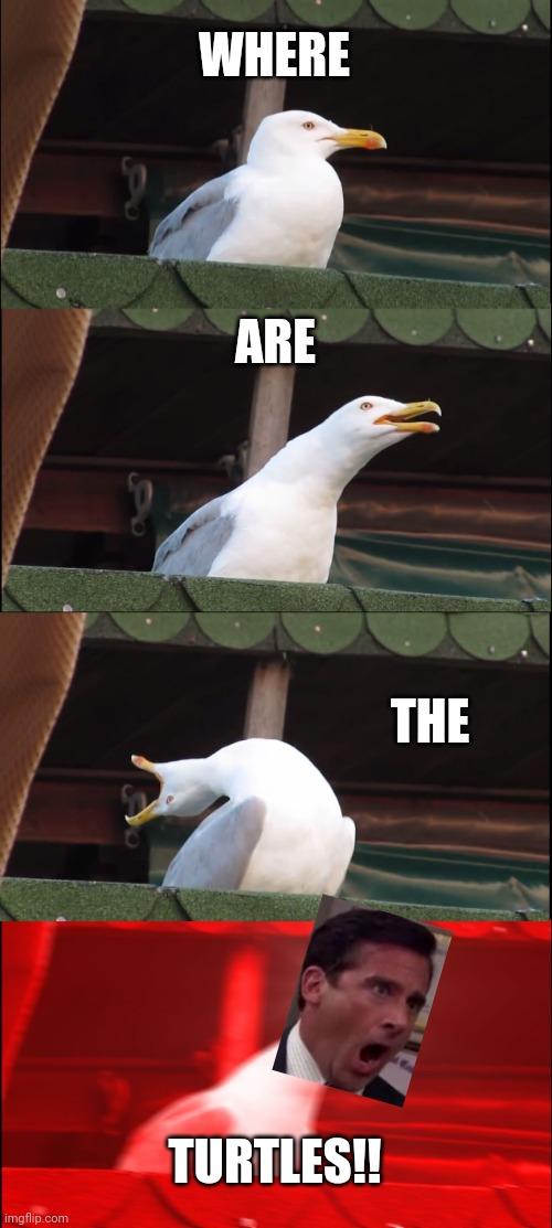 Inhaling Seagull Meme |  WHERE; ARE; THE; TURTLES!! | image tagged in memes,inhaling seagull | made w/ Imgflip meme maker
