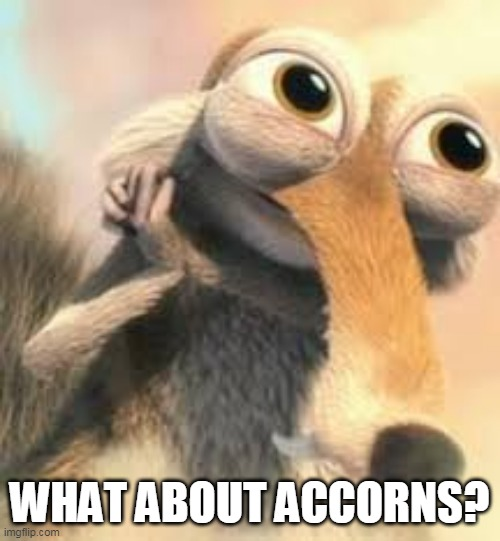 Ice age squirrel in love | WHAT ABOUT ACCORNS? | image tagged in ice age squirrel in love | made w/ Imgflip meme maker