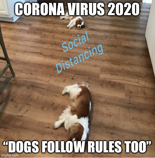"Social Distancing |  CORONA VIRUS 2020; ""DOGS FOLLOW RULES TOO"" 