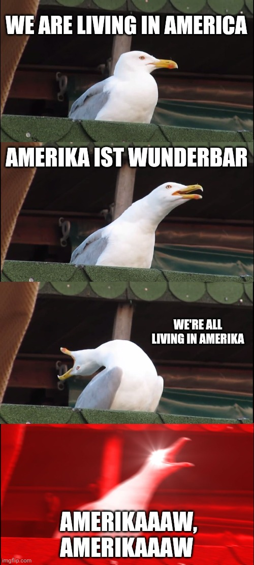 Rammstein seagull |  WE ARE LIVING IN AMERICA; AMERIKA IST WUNDERBAR; WE'RE ALL LIVING IN AMERIKA; AMERIKAAAW, AMERIKAAAW | image tagged in memes,inhaling seagull | made w/ Imgflip meme maker