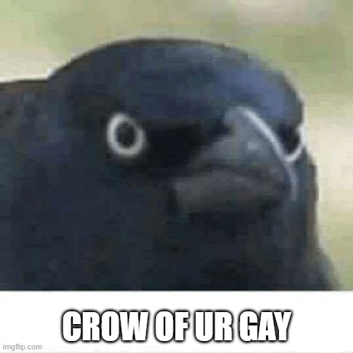 Crow of judgement |  CROW OF UR GAY | image tagged in crow of judgement | made w/ Imgflip meme maker