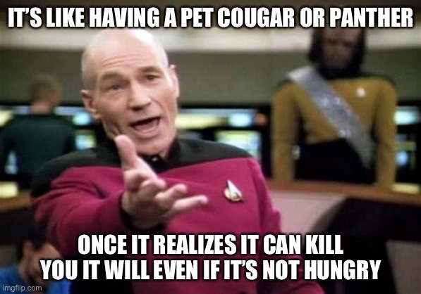 Picard Wtf Meme | IT'S LIKE HAVING A PET COUGAR OR PANTHER ONCE IT REALIZES IT CAN KILL YOU IT WILL EVEN IF IT'S NOT HUNGRY | image tagged in memes,picard wtf | made w/ Imgflip meme maker