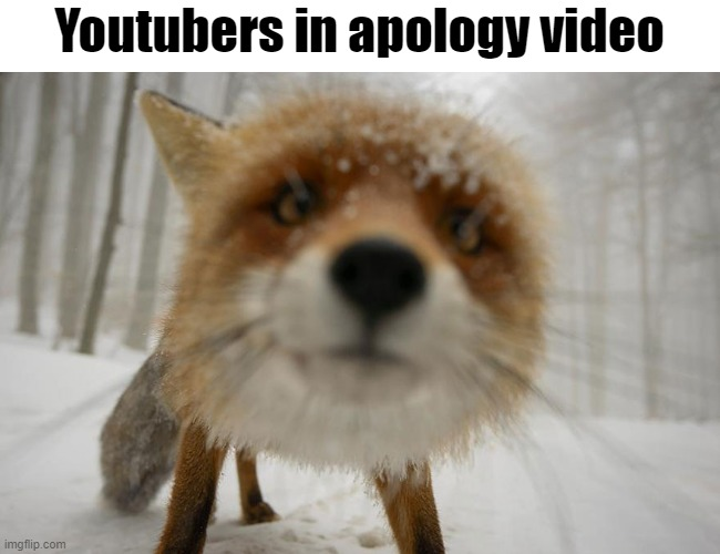 Youtubers in apology video |  Youtubers in apology video | image tagged in fun,memes,dank me,so funny | made w/ Imgflip meme maker