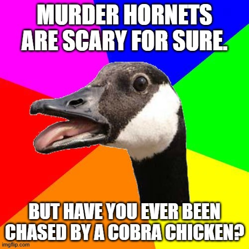 COBRA CHICKEN | image tagged in goose,cobra,murder hornet,chicken | made w/ Imgflip meme maker