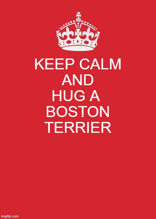 Keep Calm And Carry On Red |  KEEP CALM AND HUG A  BOSTON TERRIER | image tagged in memes,keep calm and carry on red | made w/ Imgflip meme maker
