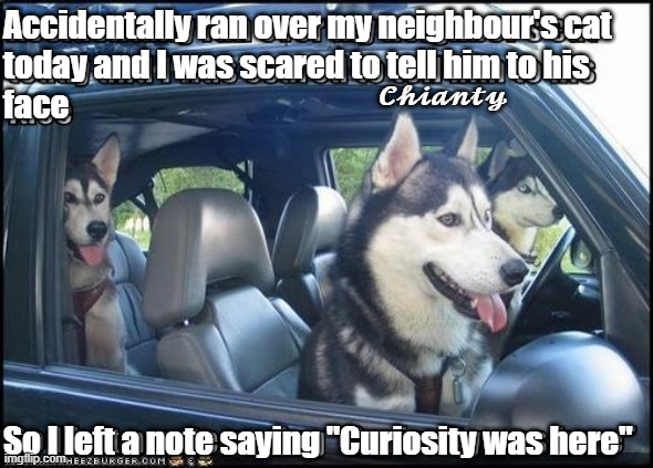 "Neighbours cat |  Accidentally ran over my neighbour's cat today and I was scared to tell him to his face; 𝓒𝓱𝓲𝓪𝓷𝓽𝔂; So I left a note saying ""Curiosity was here"" 
