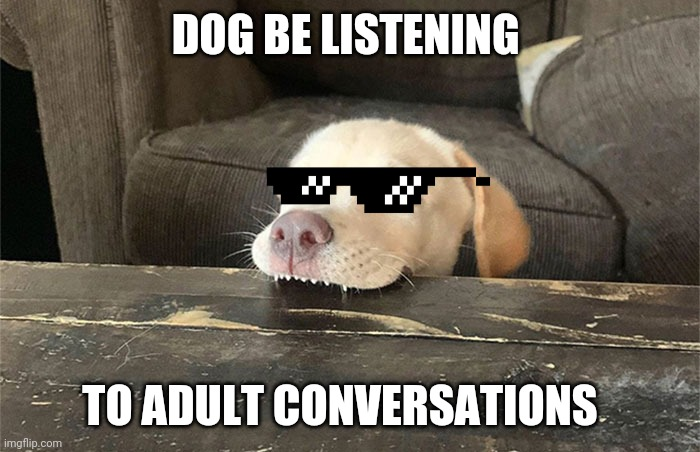 Dogs nowadays |  DOG BE LISTENING; TO ADULT CONVERSATIONS | image tagged in dog be like,deal with it,dogs,random | made w/ Imgflip meme maker