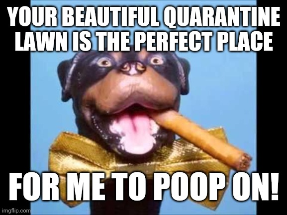 All for nought |  YOUR BEAUTIFUL QUARANTINE LAWN IS THE PERFECT PLACE; FOR ME TO POOP ON! | image tagged in triumph comic to poop on,quarantine,lawn,covid | made w/ Imgflip meme maker