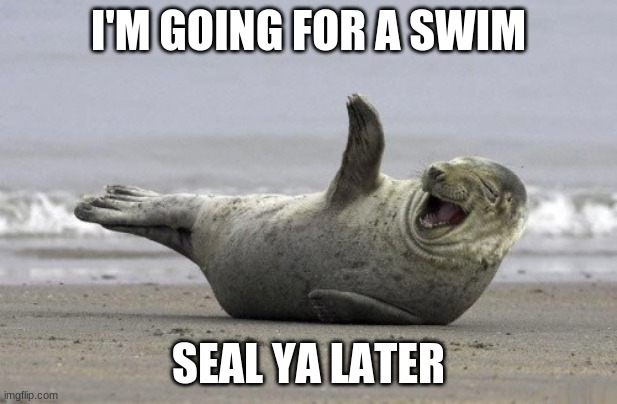 I'M GOING FOR A SWIM; SEAL YA LATER | image tagged in funny memes,seal,bad pun,bye | made w/ Imgflip meme maker