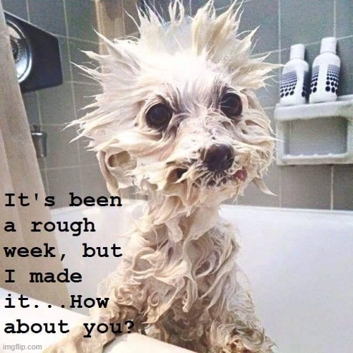 TGIF | image tagged in fun,funny,funny animals | made w/ Imgflip meme maker