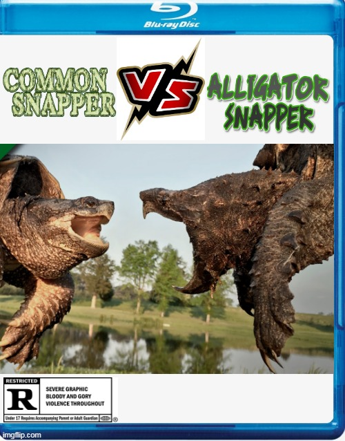 BRUTAL SHOWDOWN | image tagged in turtle,fake movies,snapping turtles,vs | made w/ Imgflip meme maker