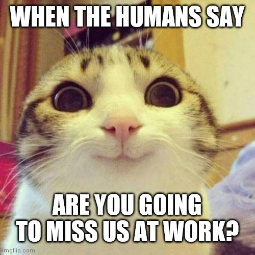 Smiling Cat Meme |  WHEN THE HUMANS SAY; ARE YOU GOING TO MISS US AT WORK? | image tagged in memes,smiling cat | made w/ Imgflip meme maker