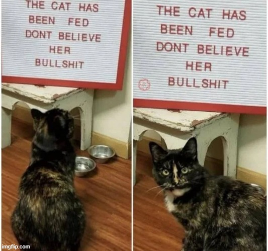 Cats usually tell the truth but in this case.... | image tagged in cats,cat,cute cat,wtf,meow | made w/ Imgflip meme maker