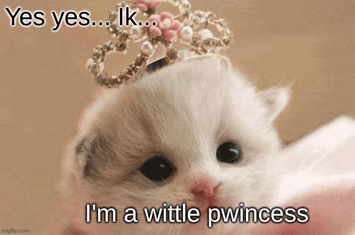 Princess Kitten |  Yes yes... Ik... I'm a wittle pwincess | image tagged in cute,princess,kitten | made w/ Imgflip meme maker