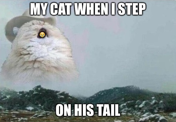 R.I.P |  😭; MY CAT WHEN I STEP; ON HIS TAIL | image tagged in country cat,funny,cats,funny cats,animals,funny animals | made w/ Imgflip meme maker