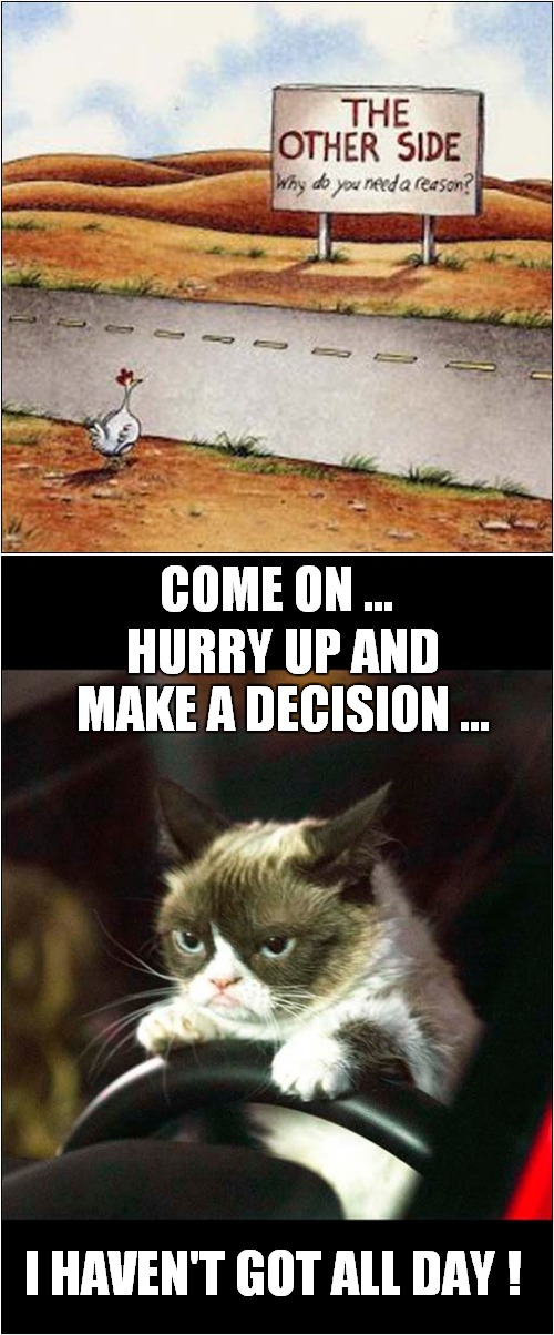 Grumpy Vs Chicken |  COME ON ... HURRY UP AND MAKE A DECISION ... I HAVEN'T GOT ALL DAY ! | image tagged in fun,grumpy cat,why did the chicken cross the road | made w/ Imgflip meme maker