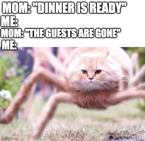 "Spider Cat |  MOM: ""DINNER IS READY""; ME:; MOM: ""THE GUESTS ARE GONE""; ME: 