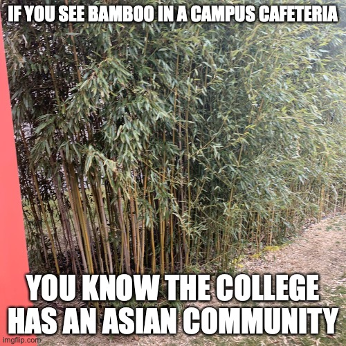 Bamboo in a Cafeteria |  IF YOU SEE BAMBOO IN A CAMPUS CAFETERIA; YOU KNOW THE COLLEGE HAS AN ASIAN COMMUNITY | image tagged in bamboo,memes,college | made w/ Imgflip meme maker