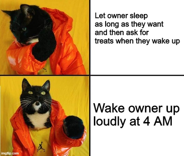 Kitty Drake meme |  Let owner sleep as long as they want and then ask for treats when they wake up; Wake owner up loudly at 4 AM | image tagged in kitty drake,cat,cat meme | made w/ Imgflip meme maker