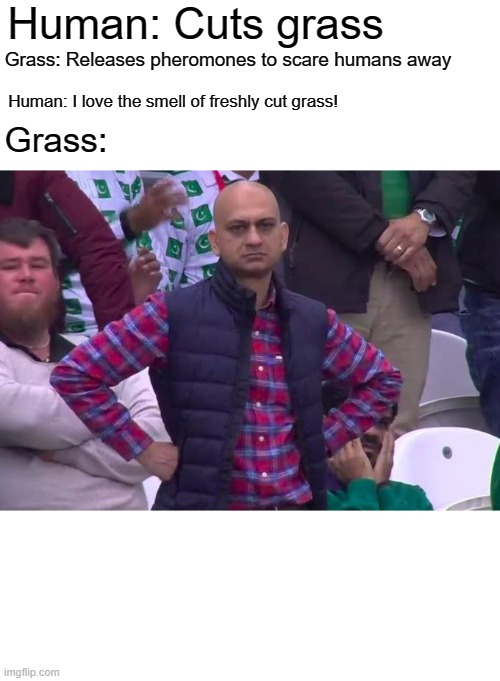 Angry Pakistani Fan |  Human: Cuts grass; Grass: Releases pheromones to scare humans away; Grass:; Human: I love the smell of freshly cut grass! | image tagged in angry pakistani fan | made w/ Imgflip meme maker