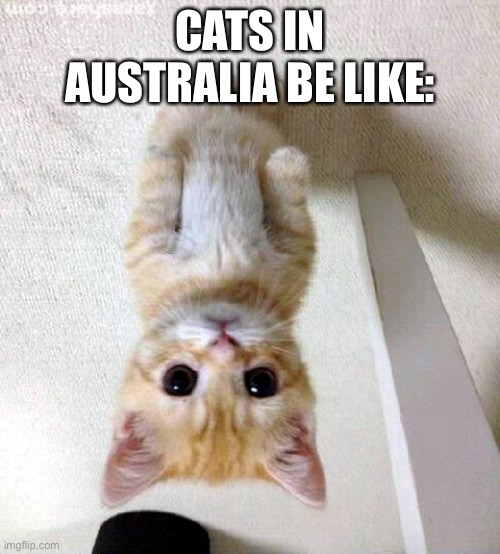 Australia |  CATS IN AUSTRALIA BE LIKE: | image tagged in memes,cute cat | made w/ Imgflip meme maker