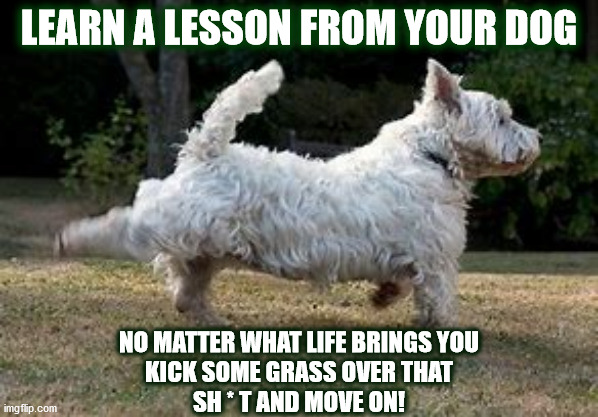 DOGGIE LESSON #1 |  LEARN A LESSON FROM YOUR DOG; NO MATTER WHAT LIFE BRINGS YOU KICK SOME GRASS OVER THAT SH * T AND MOVE ON! | image tagged in dog,kick,kicking,lesson,life lessons,scotty | made w/ Imgflip meme maker