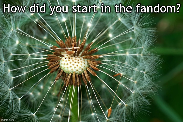 We all started somewhere |  How did you start in the fandom? | image tagged in furry,the furry fandom | made w/ Imgflip meme maker