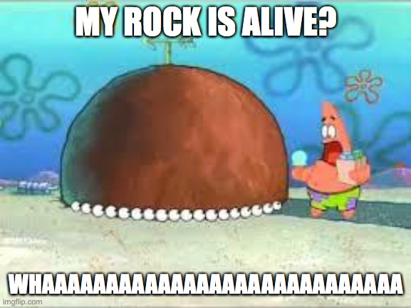 WHO ARE YOU PEOPLE? |  MY ROCK IS ALIVE? WHAAAAAAAAAAAAAAAAAAAAAAAAAAAA | image tagged in who are you people | made w/ Imgflip meme maker