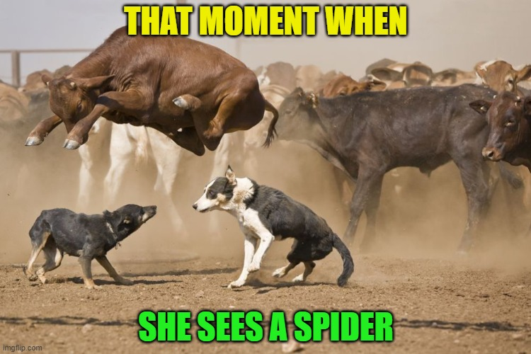 Seriously, not too far from the truth!  LOL |  THAT MOMENT WHEN; SHE SEES A SPIDER | image tagged in funny,spider,bugs,scared,surprised,couples | made w/ Imgflip meme maker