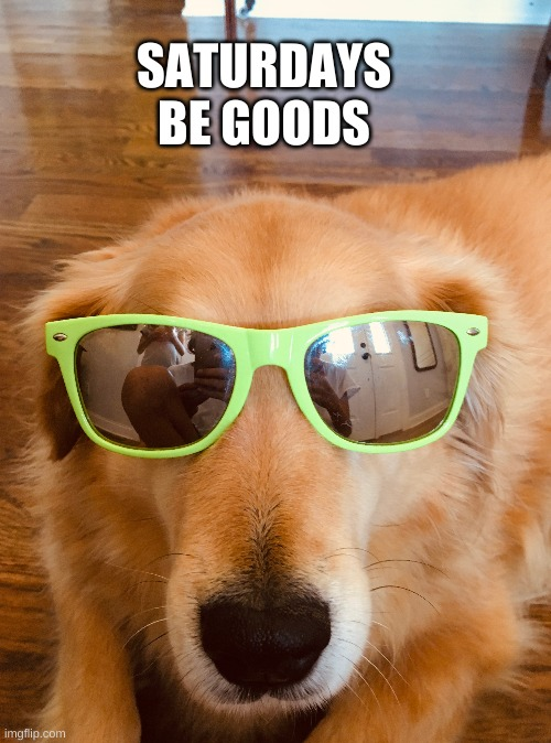 Saturdays be goods |  SATURDAYS BE GOODS | image tagged in saturday,funny dogs | made w/ Imgflip meme maker