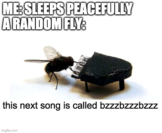 Every night... |  ME: SLEEPS PEACEFULLY A RANDOM FLY:; this next song is called bzzzbzzzbzzz | image tagged in fly,buzz,memes,funny,baby jesus,frontpage | made w/ Imgflip meme maker