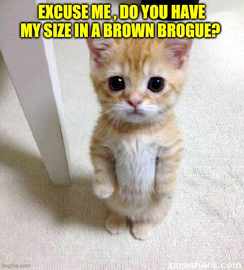 Cute Cat |  EXCUSE ME , DO YOU HAVE MY SIZE IN A BROWN BROGUE? | image tagged in memes,cute cat | made w/ Imgflip meme maker