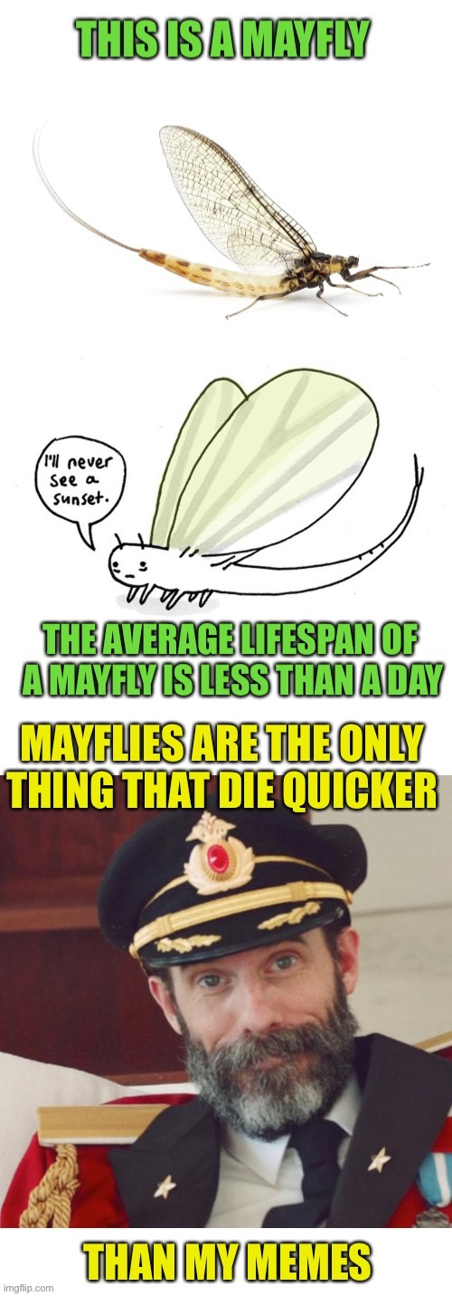 I may have posted something similar last May, may as well do it again if I may. | image tagged in mayfly,memes,dying,captain obvious,short,shelf life | made w/ Imgflip meme maker