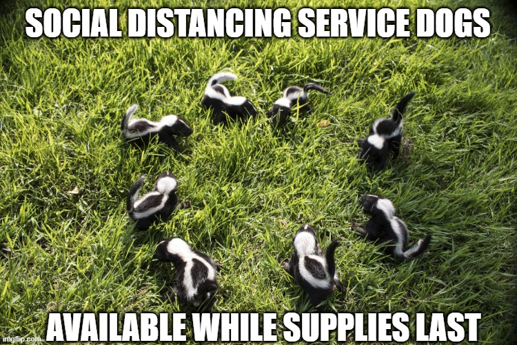 SOCIAL DISTANCING SERVICE DOGS; AVAILABLE WHILE SUPPLIES LAST | image tagged in skunk meeting,joke,false advertising | made w/ Imgflip meme maker