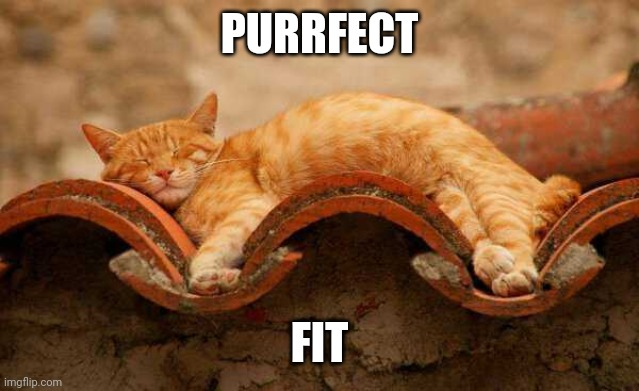 MOLDS TO KITTY |  PURRFECT; FIT | image tagged in cats,funny cats,cute cat | made w/ Imgflip meme maker