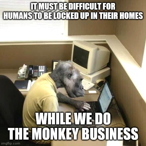 Monkey Business |  IT MUST BE DIFFICULT FOR HUMANS TO BE LOCKED UP IN THEIR HOMES; WHILE WE DO THE MONKEY BUSINESS | image tagged in memes,monkey business,coronavirus,self isolation,human race,lockdown | made w/ Imgflip meme maker