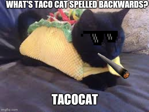 TacoCat |  WHAT'S TACO CAT SPELLED BACKWARDS? TACOCAT | image tagged in taco cat | made w/ Imgflip meme maker