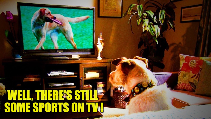 TV Sports |  WELL, THERE'S STILL  SOME SPORTS ON TV ! | image tagged in dog watching tv | made w/ Imgflip meme maker