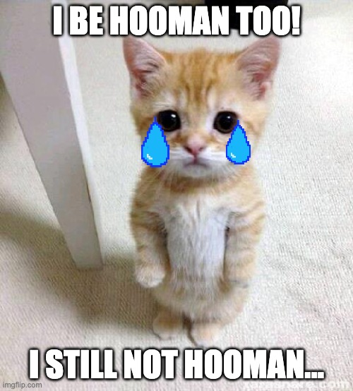 When I try to be something |  I BE HOOMAN TOO! I STILL NOT HOOMAN... | image tagged in memes,cute cat | made w/ Imgflip meme maker
